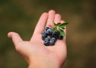 Agriculture berries berry
